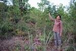 Hơn 10 năm đi đòi 3 ha đất bố mẹ đẻ nhờ hàng xóm trông nom