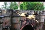 Điều bí ẩn nào khiến tất cả chó cưng đều tự tử khi đi qua cây cầu này