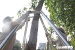 Ảnh: Dưới cái nắng gay gắt, công nhân chăm cây, làm đẹp phố đi bộ Trịnh Công Sơn