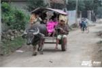 Ảnh: Xe trâu đưa đón học sinh miễn phí của người đàn ông tật nguyền
