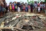 Video: Dân làng vác dao, búa tới nông trại giết chết gần 300 con cá sấu báo thù cho người đàn ông