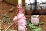 Bảo mẫu bạo hành dã man bé trai 2 tuổi: Huyện Đắk R'Lấp vào cuộc làm rõ