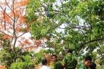 Nghẹt thở giải cứu cô gái nghi ngáo đá trèo lên cây nhảy múa bên vực sâu