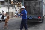 Bắt chó thả rông, không rọ mõm ở trung tâm TP.HCM