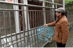Chủ vườn thú Trung Quốc gây tranh cãi khi để động vật ăn thịt lẫn nhau