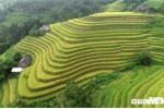 Ảnh: Ruộng bậc thang mùa lúa chín ở Hà Giang, cảnh đẹp mỗi năm chỉ có một lần