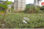 Clip: Kinh hãi cầu 55 tỷ đồng ở Thanh Hóa biến thành nơi tiêm chích của con nghiện