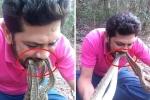 Clip: Người đàn ông liều mạng ngậm 4 con rắn chuông kịch độc trong miệng