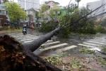 Thời tiết tháng 12: Biển Đông có thể đón bão, áp thấp nhiệt đới