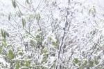 Video: Du khách thích thú ngắm tuyết rơi ở Sa Pa