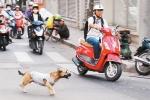 Video: Những tai nạn bất ngờ khi va phải chó thả rông