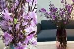 Sự thật về hoa đỗ quyên ngủ đông - 'cành củi khô' bị tẩm hóa chất?