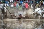 Lễ hội đua bò cuồng nhiệt nhất thế giới