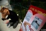 Trung Quốc: Đóng giả ngựa gom tiền chữa bệnh bạch cầu cho con