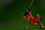 Clip: Bọ ngựa 'biểu diễn kungfu' xua đuổi nhện 'khủng'