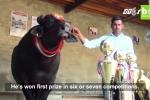 Kỳ lạ chú bò khổng lồ, đắt nhất Ấn Độ mê rượu, bia