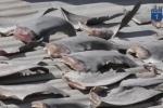 Video: Bộ Công thương yêu cầu báo cáo gấp vụ phơi vây cá mập