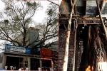 Bắc Ninh: Cây đề trăm tuổi bị một hộ dân 'bức tử', xây nhà ôm trọn gốc
