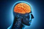 Ăn quá nhiều, lười suy nghĩ gây tổn hại não bộ