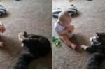 Phì cười clip em bé bắt chước mèo liếm chân