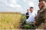 Vì sao Triều Tiên vẫn mùa màng bội thu bất chấp các lệnh trừng phạt