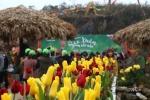 Nườm nượp khách rủ nhau trẩy hội 'Sắc xuân Tây Bắc' tại Sa Pa