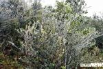 Ảnh: Băng tuyết phủ trắng đỉnh Mẫu Sơn