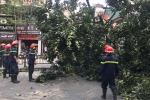 Video: Cây đa cổ thụ đổ chắn ngang đường, giao thông tê liệt ở Hà Nội