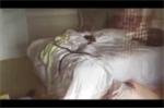 Tá hỏa phát hiện rắn nâu cực độc trườn trong phòng ngủ thiếu nữ