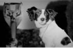 Pickles, chú chó cứu thể diện nước Anh ở World Cup 1966