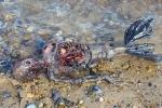Video: Xác 'thủy quái' hình dạng nửa người nửa cá trôi dạt vào bờ biển Anh
