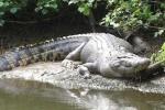 Bé 2 tuổi bị cá sấu lôi xuống hồ ở Disney World