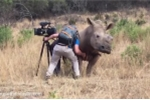 Tê giác khổng lồ chạy tới đòi người gãi bụng cực đáng yêu