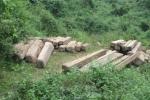Khởi tố, bắt tạm giam 2 trạm trưởng bảo vệ rừng ở Nghệ An