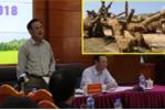 Cây 'quái thú' vi vu trên quốc lộ: Thứ trưởng Nông nghiệp nói 'rõ ràng không bình thường'
