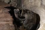 Tìm thấy hàng chục xác ướp, có cả trẻ con ở Ai Cập