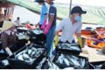 Ngư dân Quảng Bình bán hết 61 tấn hải sản đánh bắt từ ngư trường truyền thống