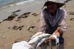Tìm ra nguyên nhân cá chết hàng loạt tại vùng biển Vũng Áng