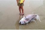 Cá chết trắng biển miền Trung: Bộ Nông nghiệp 'ra lệnh' khẩn