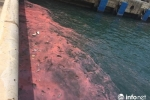 Lại xuất hiện dải nước màu hồng tại cảng Sơn Dương