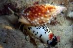 Cô giáo trẻ chết sau khi ăn ốc lạ: Độc của loại ốc này không có thuốc giải