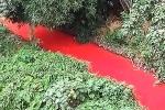 Dòng sông đang xanh trong bất ngờ chuyển màu đỏ máu như phim kinh dị chỉ sau 1 đêm