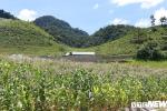 Đất đai và hàng chục khối gỗ quý của trùm ma túy Nguyễn Thanh Tuân được xử lý thế nào?