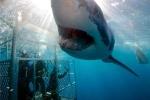 5 pha chạm trán kinh hoàng giữa người và cá mập