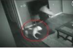 Xôn xao clip trộm đột nhập nhà cô gái, bị chó lao ra cắn tơi tả