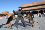 Cái Tết không nghỉ của đội chó tuần tra Tử Cấm Thành