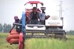 Video: Dân Nghệ An gấp rút gặt lúa chạy bão số 10