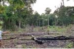 Hơn 20 cán bộ công an, kiểm lâm ở Phú Quốc vượt rừng dập lửa