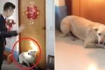 Clip: Chó cưng quyết chặn cửa, không cho cô chủ đi lấy chồng