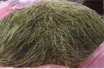 'Cát lợn' nặng gần 1 kg tại Nam Định